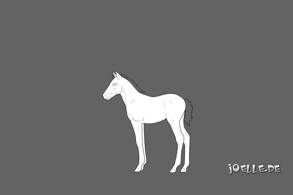 Andalusier-Fohlen_APf1.jpg