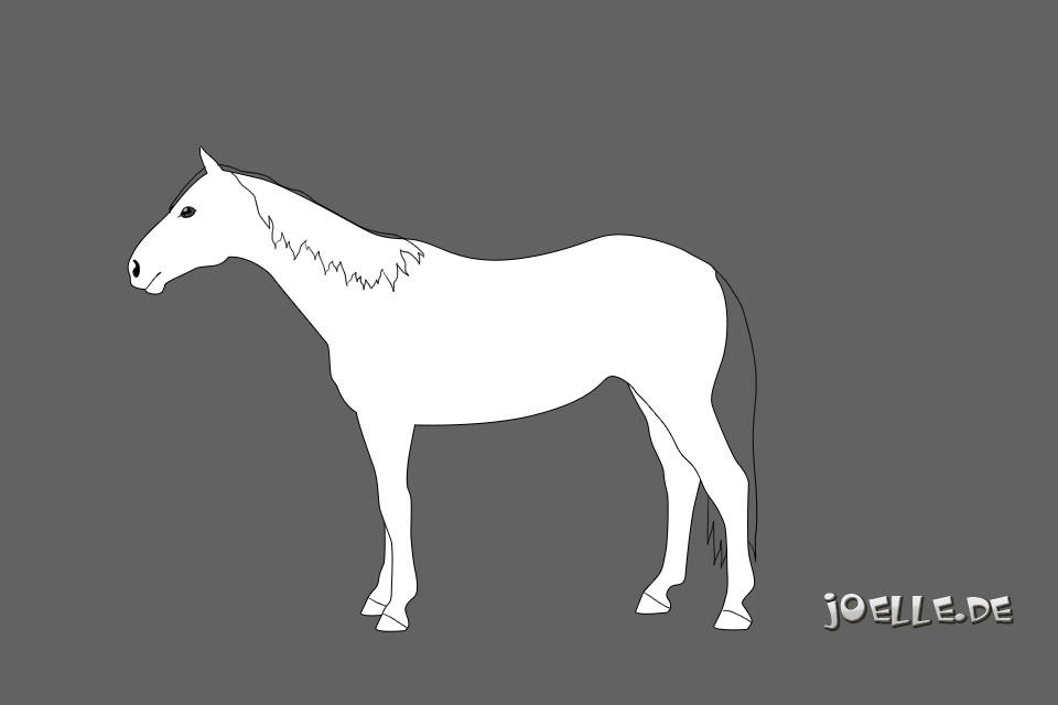 australian_stockhorse_ASH2.jpg