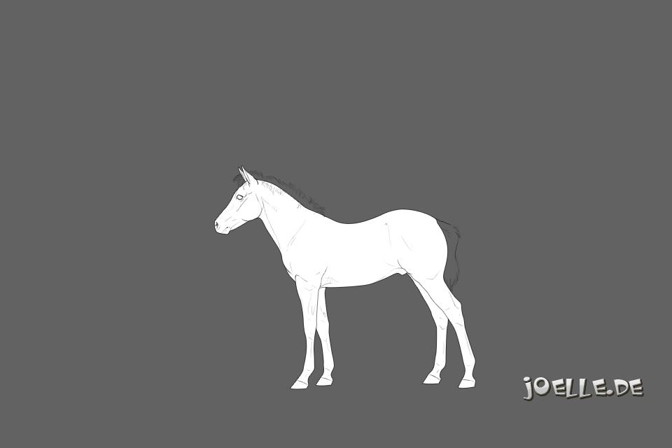 ponyfohlen.jpg
