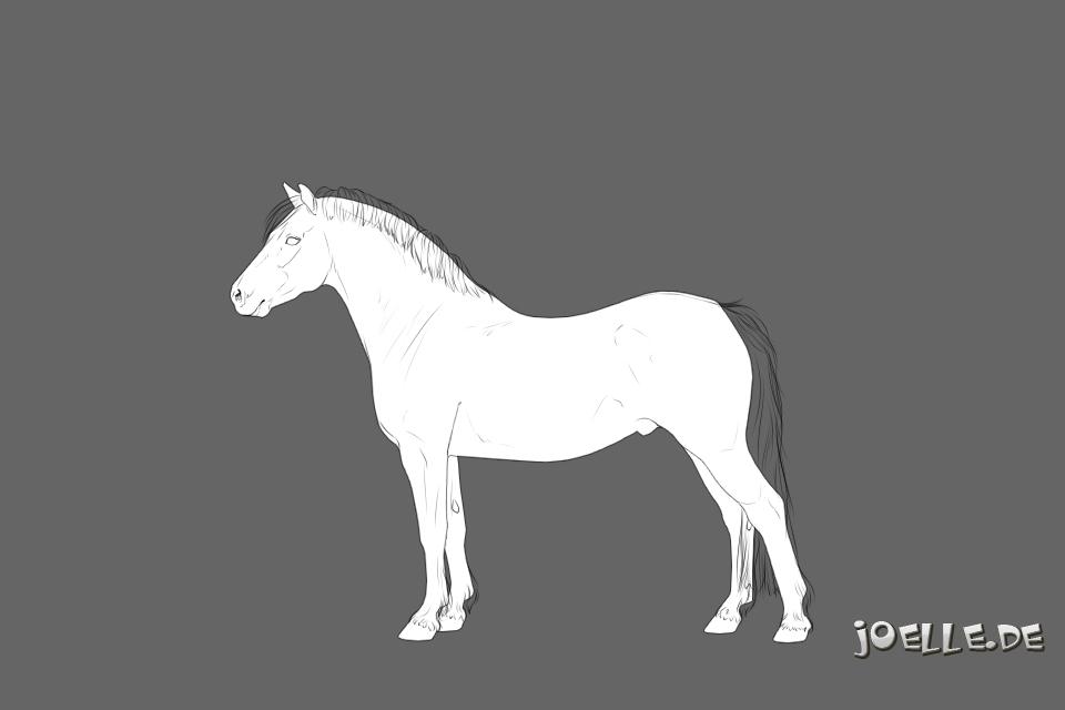 Welsh Pony Cob-Typ(C) Kopie.jpg